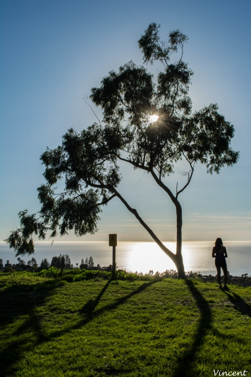 tree-in-palos-verdes-1-of-1