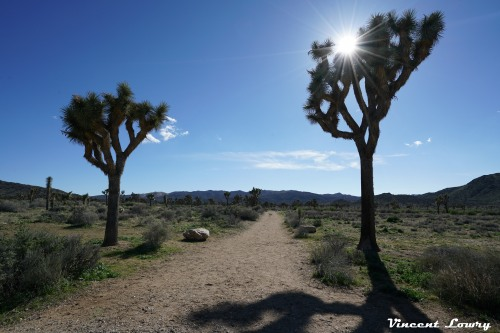 Joshua Tree 2 (1 of 1).jpg